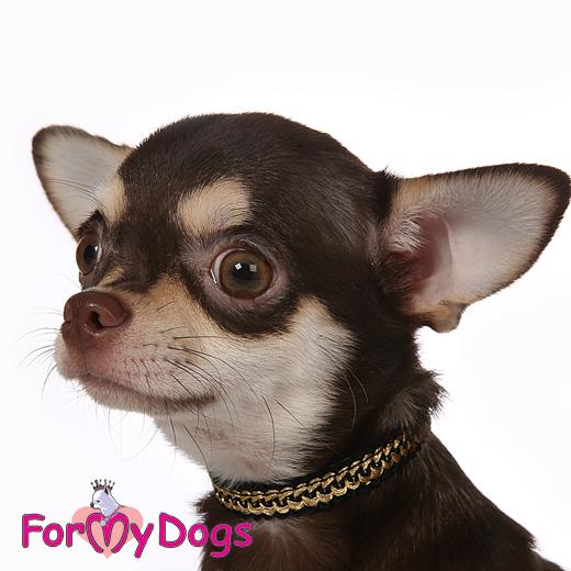 Ошейник для маленьких собак