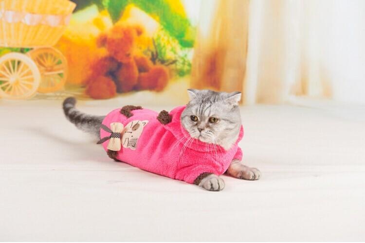 Одежда для кошек в Москве